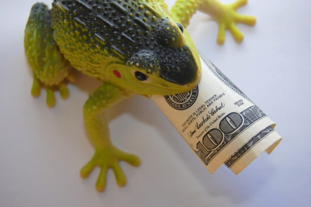 rana con dinero